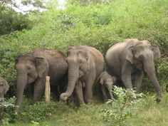 wild animal pictures | animal elephant wild life download