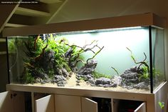 Source by akabo Home Aquarium, Nature Aquarium, Aquarium Design, Aquarium Fish Tank, Planted Aquarium, Aquascaping, Community Fish Tank, Aquarium Cabinet, Aqua Rooms