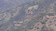 Aguila chilena (Geranoaetus melanoleucus)  volando en el cordón de los españoles, región metropolitana.