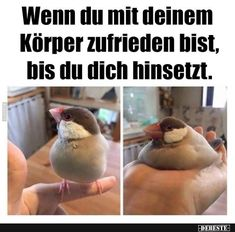 Really Funny, Funny Cute, Tierischer Humor, Funny Sports Pictures, Funny Memes, Jokes, Morning Humor, Retro Humor, Laugh Out Loud