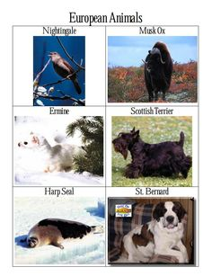 Animals from different areas of the world.   http://www.magellanmontessori.com/topic/198/introduction-geography…