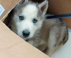 what if... you opened a box and found this darling inside??
