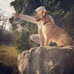 "25 To se mi líbí, 0 komentářů – Lucky the Golden (@luckygoldenretriever2018) na Instagramu: ""Duck hunting .... last trip in this year #trip#doglovers#retriever#psizivot#konecroku2019…"" Duck Hunting, Labrador Retriever, Dogs, Animals, Labrador Retrievers, Animales, Animaux, Pet Dogs, Doggies"