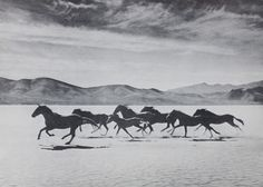 Gus Bundy. Wild horses round up in Nevada. Late 1950s