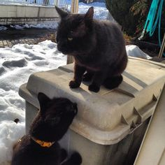 "After the big Snow days...my cat could meet her lover again...  ""You are alived!"""
