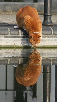 Perfect light for this amazing reflection photo of the best of all kitties! Ginger cats!!!