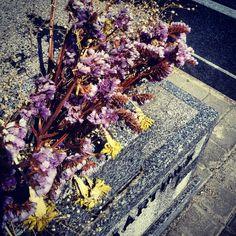 Violet flowers in la Almudena cemetery