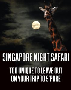 Singapore Night Safari is one of the best activities you can do during your stay in Singapore. Read what makes the night safari an unforgettable experience! Singapore Outfit, Singapore Vacation, Singapore Travel Tips, Stay In Singapore, Holiday In Singapore, Singapore Malaysia, Singapore Sling, Singapore Attractions, Singapore Guide