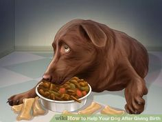 Image titled Help Your Dog After Giving Birth Step 4