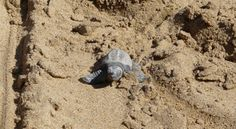 Purple Tips: 20 Things to do on Zante Holidays Cool Places To Visit, Places To Go, Turtle Hatching, Purple Tips, Things To Do, Greece Holidays, Fun, Turtles, Travel