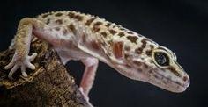 Selecting the Proper Reptile Species  http://www.petplace.com/article/reptiles/general/adopting-or-purchasing-a-reptile/selecting-the-proper-reptile-species