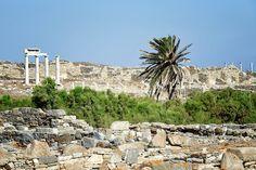 Sacred Lake Palm tree. Delos. Greece.