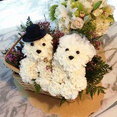 Puppy flowers