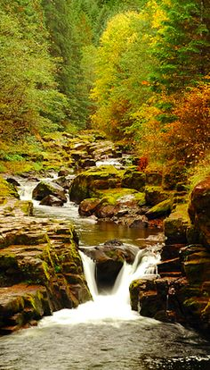 Autumn at Brice Creek near Cottage Grove, Oregon • photo: greglief on deviantart
