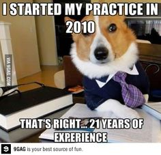 Lawyer dog experience