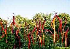 "Carmel and Red Fiori - Chihuly Glass Art, 2015 --""Chihuly in the Atlanta Botanical Garden Hobbies For Women, Hobbies That Make Money, Atlanta Botanical Garden, Botanical Gardens, Outdoor Art, Stained Glass Art, Garden Art, Most Beautiful Pictures, Photography"