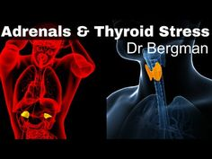 How to Heal Thyroid and Adrenal Fatigue ~ Thyroid and adrenal fatigue are linked. Nothing in the body exists in a vacuum. Everything is connected. Find out more in my latest video on thyroid stress and adrenal fatigue.