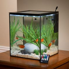 Current SOLO Desktop Aquarium  I saw this at Aquatic Experience Chicago 2014 show.  I want it!! (No place for it though)