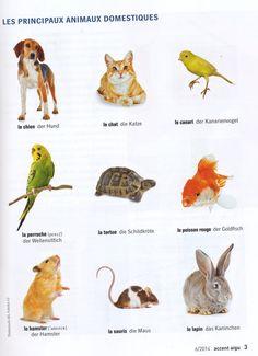 Les principaux animaux domestiques