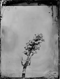 2014 Still Life Series karen Hook Photography Wet Plate Collodian