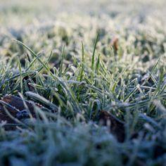 Wintermorning, photo by Jorinde Reijnierse