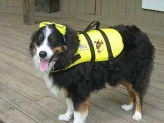 ABC22 Dayton's Dog of the Day - Ranger