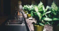 When searching for indoor plants for your office in Philadelphia, Plantscapes U. can create the perfect indoor plant installation to help create a healthy and beautiful office atmosphere. Touchless Kitchen Faucet, Best Kitchen Faucets, Kitchen Sink, Kitchen Stools, Household Plants, Best Indoor Plants, Trendy Home, Modern Kitchen Design, Artificial Plants