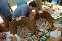 Hudson Valley Garlic Festival - September 28th and 29th, 2013- Saturday 10AM to 6PM --- Sunday 10AM to 5PM