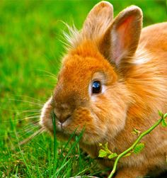 Beautifully colored bunny
