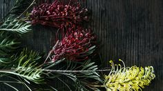 From banksia to leucadendron, we can't get enough of these stunning proteas. Flora Flowers, Back Gardens, Planting Flowers, Bloom, Backyard, Canning, Floral, Plants, Magazine
