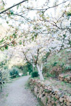 cheries in Crete, blossom