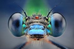 Bug portraits: detailed macro pictures of insects by Dusan Beno - Telegraph