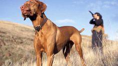 Jara y sedal - Campeonato de España de caza menor con perro, Jara y sedal  online, completo y gratis en RTVE.es A la Carta. Todos los programas de Jara y sedal online en RTVE.es A la Carta