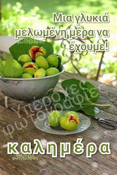 Good Morning, Fruit, Bom Dia, Buen Dia, Bonjour, The Fruit, Buongiorno