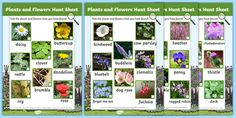 Plants and Flowers Hunt Sheet Forest School Activities, Activities To Do, Common Garden Plants, All About Plants, Working Drawing, Outdoor Learning, Plant Growth, Plant Species, Eyfs