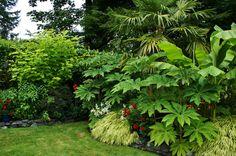 Tetrapanax, Musa, Trachycarpus, Hakonechloa, Catalpa 'Aurea'