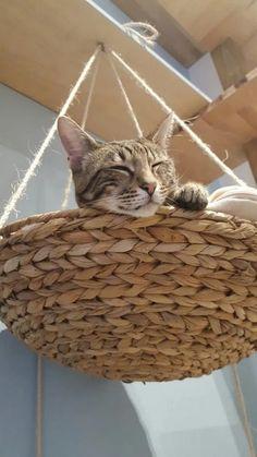 ✔ 10 Top Creative DIY Basket for Cat To Your Home * allhous.com #diybasket #diybasketforcat #cat
