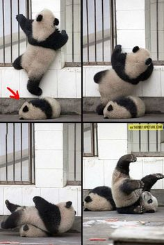 Look At The Panda In The Floor, He Couldn't Care Any Less
