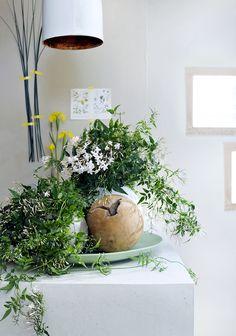 Weiße Blüten in Kombination mit dekorativen Elementen – Pflanzenfreude.de