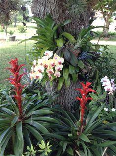 Bromelias y orquídeas
