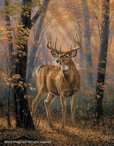 "rosemary millette paintings | Rosemary Millette Original Acrylic Painting:""Woodland Mist-Whitetail ..."