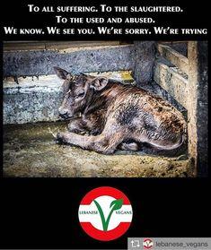 please go vegan, the suffering of animals breaks my heart