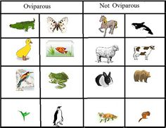 Oviparous and Non-Oviparous Animals and a million other egg lessons and activities