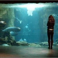 Dallas world aquarium animals