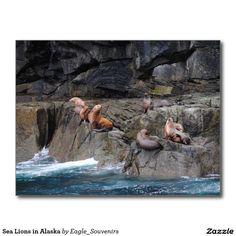 Sea Lions in Alaska Postcard  #sea #lion, #alaska, #wildlife, #nature, #ocean, #sea, #wilderness, #wild, #usa, #america #postcard