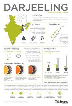 Fascinating world of Darjeeling tea.