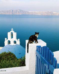 One cat; stunning view