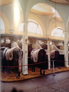 The Queen's horses. Been to the royal horse barn!