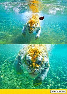Fierce Underwater Attack