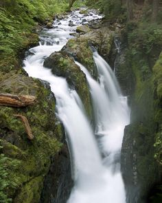 Streams in temperate rainforest, in Washington State - would love to be there in person and hear that water.